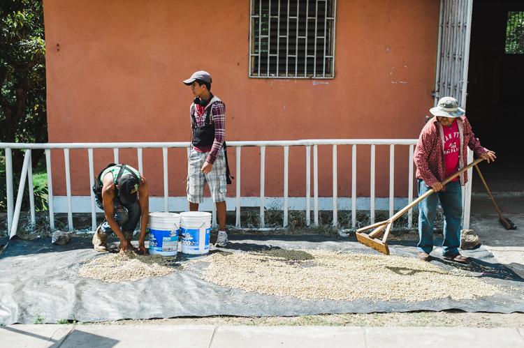 Kaffee wird getrocknet - viele Familien, in denen ein Familienmitglied ein Haus auf dem Land hat, produzieren auch geringe Mengen Kaffee, der dann getrocknet und an Zwischenhändler verkauft wird.