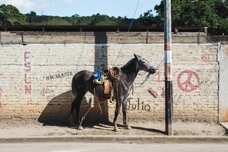 Pferd vor bemalter Wand