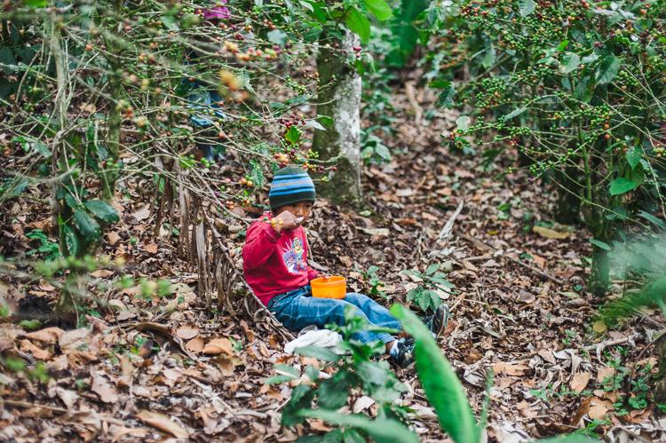 Junge frühstückt zwischen Kaffee-Pflanzen.