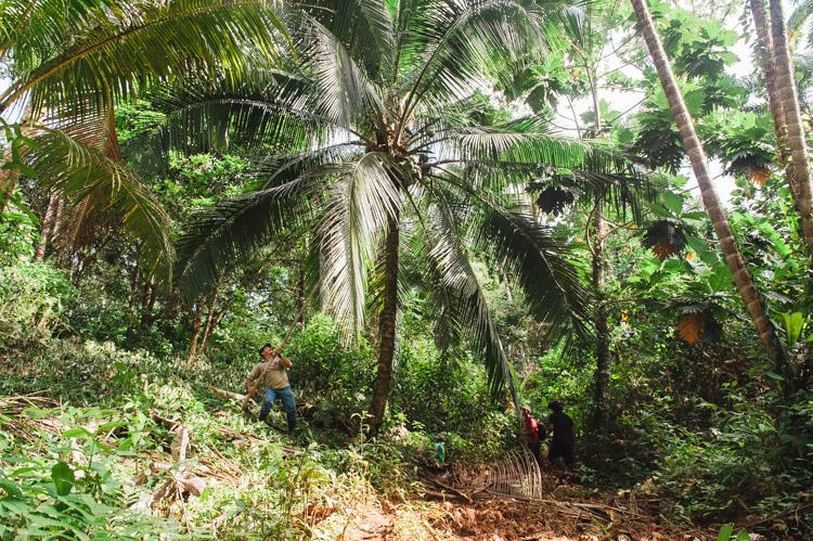 """Nachdem wir viel durch abgeholzte Gebiete gewandert sind, auf denen nun Vieh grast und Bohnen, Mais und vieles mehr angebaut wird, geht es heute durch """"echten"""" Dschungel, inklusive Kokosnuss-Snack."""