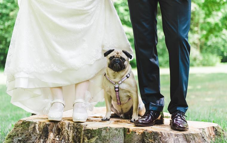 Beine eines Hochzeitspaares mit Mops Hund