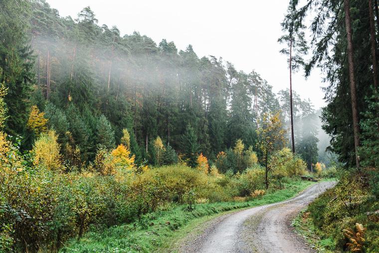 Nebel im Waldgebiet Christenberger Talgrund