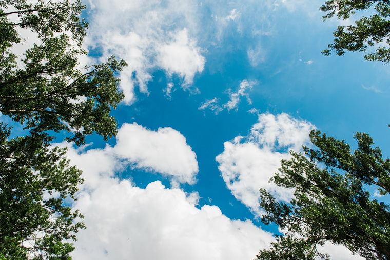 Blick durch die Baumkronen in den Himmel