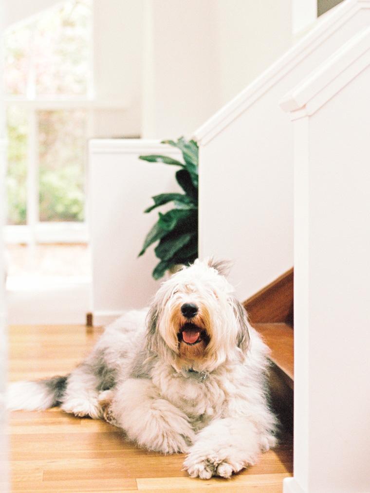 Hund liegt auf Boden