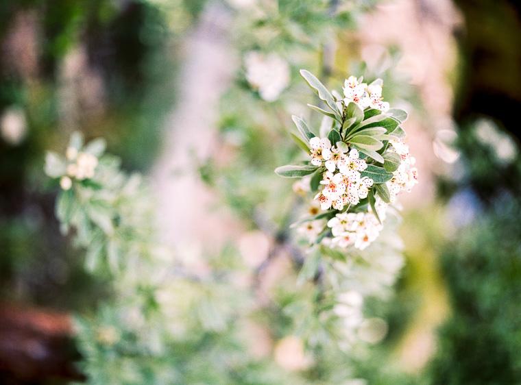 Nahaufnahme Blumen im Botanischen Garten