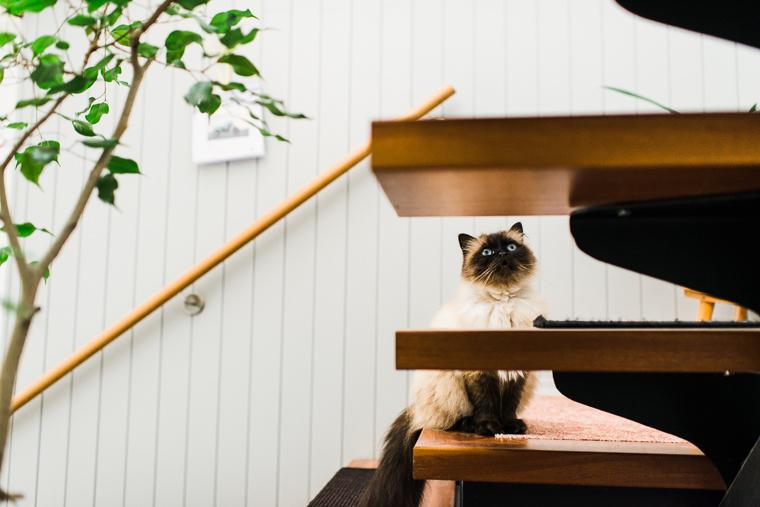 Katze sitzt auf Treppe während Hochzeitsvorbereitungen