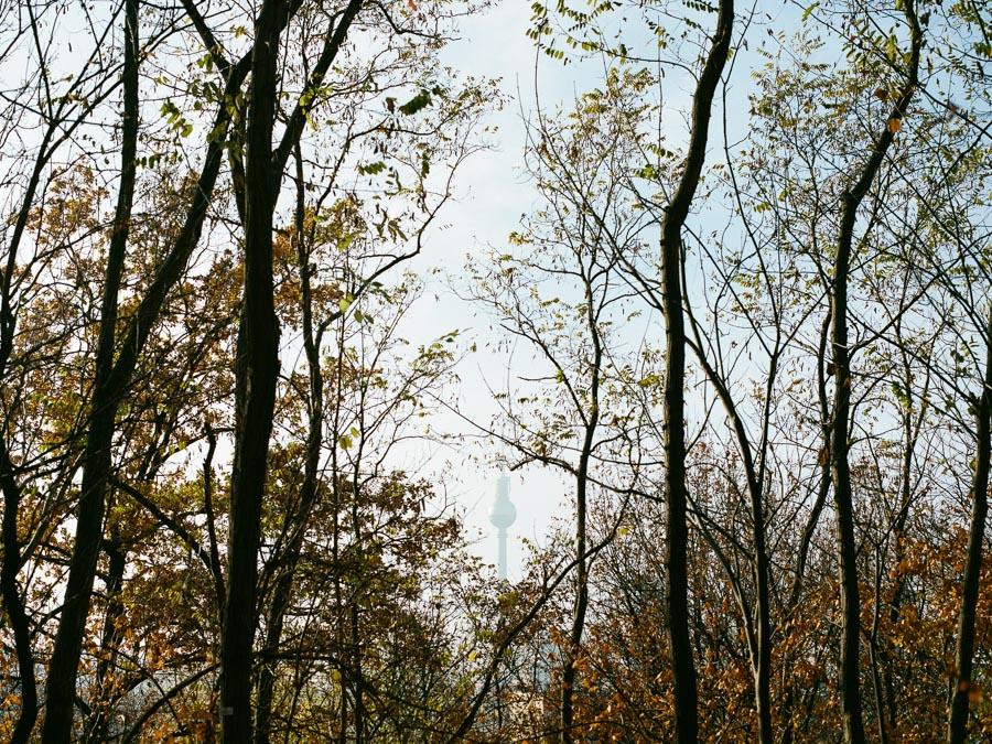 Blick auf Berliner Fernsehturm durch Bäume