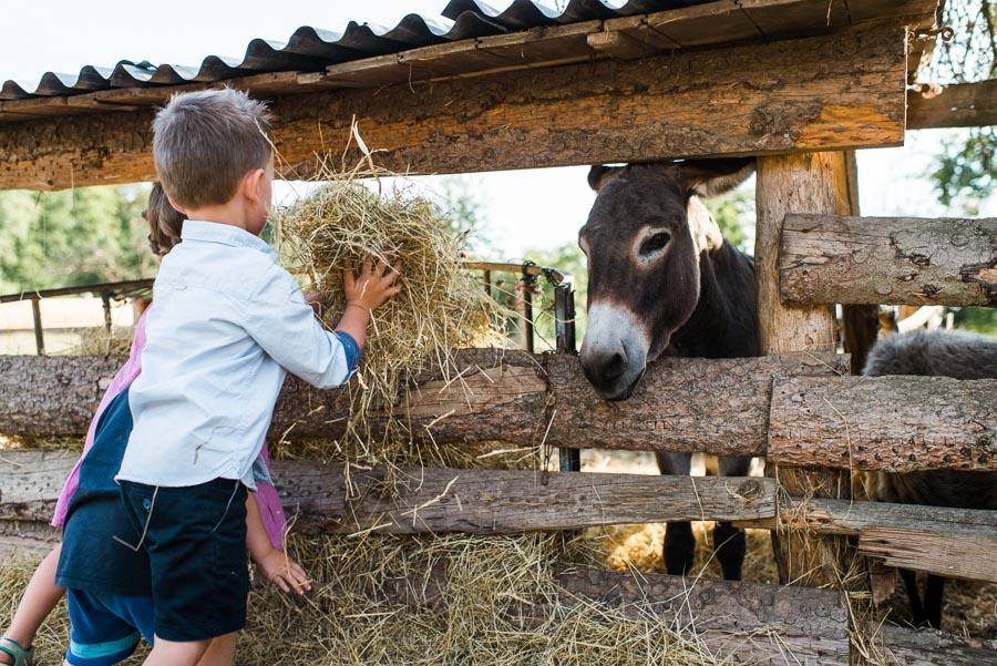Kinder füttern Esel