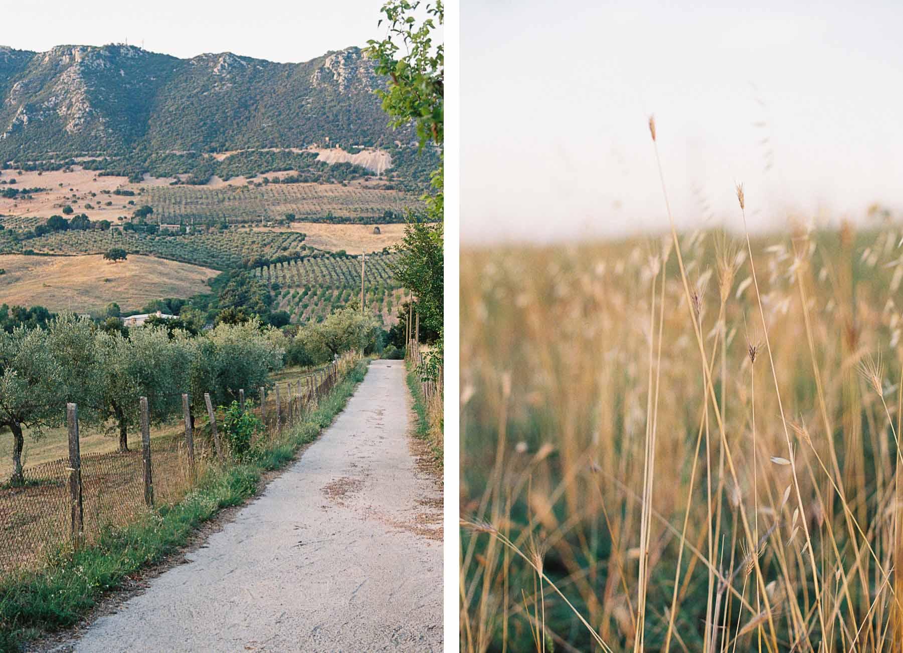 Weg durch Olivenhain und Detailansicht von Gräsern