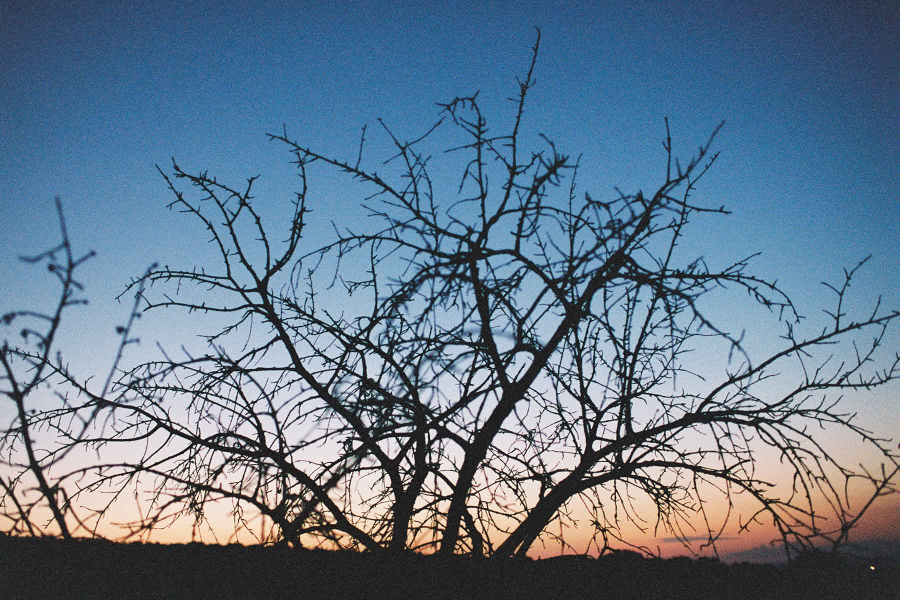 Baumsilhouette im Sonnenuntergang